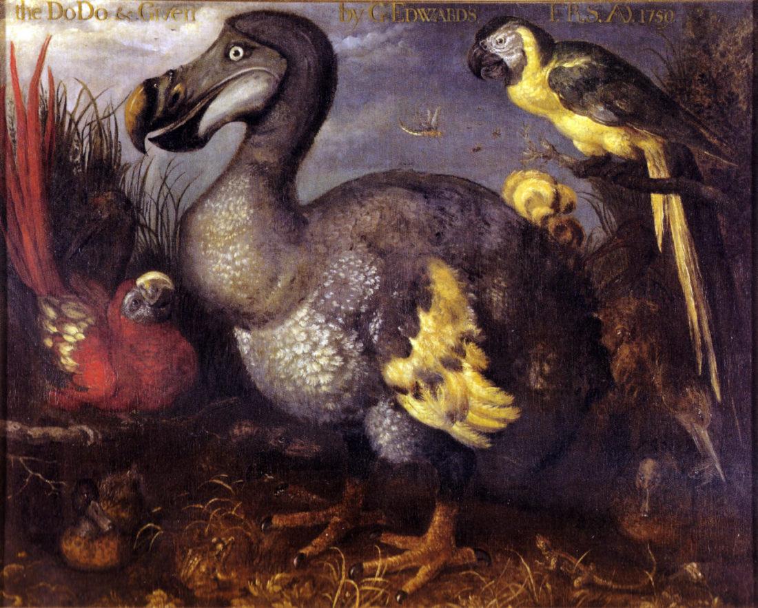Roelant Savery Dodo